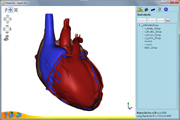 Heart 3D model shown in Viewer3ds